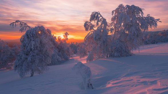Обои Яркий закат солнца на фоне гор, леса и деревьев в снегу