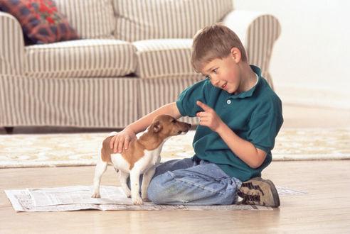Обои Мальчик проводит воспитательную работу со своей собакой
