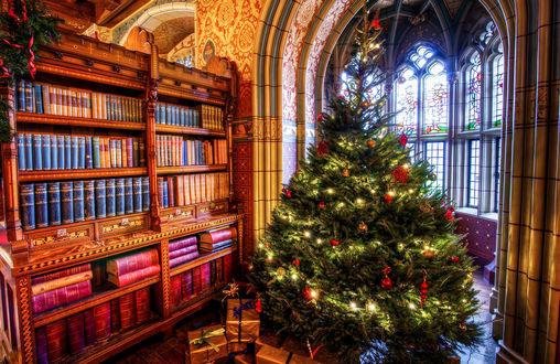 Обои Наряженная елочка в библиотеке, под елочкой лежат подарки