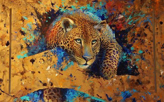 Обои Леопард на разноцветном фоне