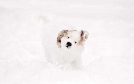 Обои Щенок отряхивается от снега