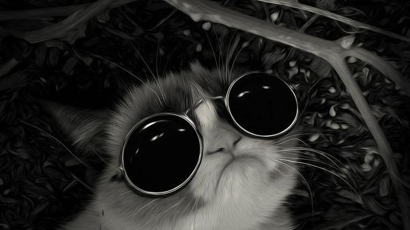 Обои Grumpy Cat («Сердитый Котик»), настоящая кличка — Соус Тардар / Tardar Sauce/ — кошка, ставшая знаменитой благодаря необычной внешности, в темных круглых очках