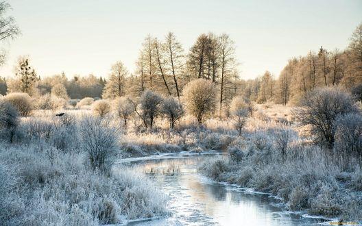 Обои Река, скованная льдом, деревья, растущие вдоль реки, покрыты снегом