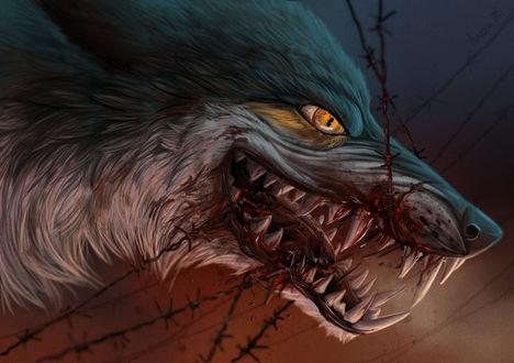 Обои Злая окровавленная морда волка, by Alaiaorax