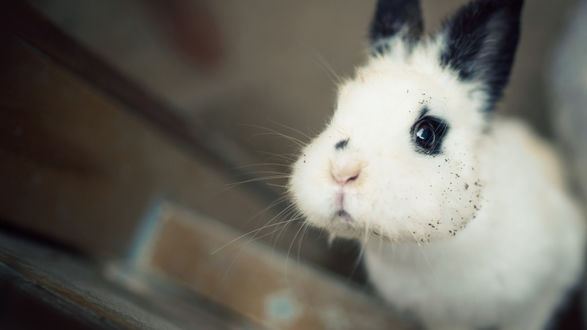 Обои Кролик на размытом фоне