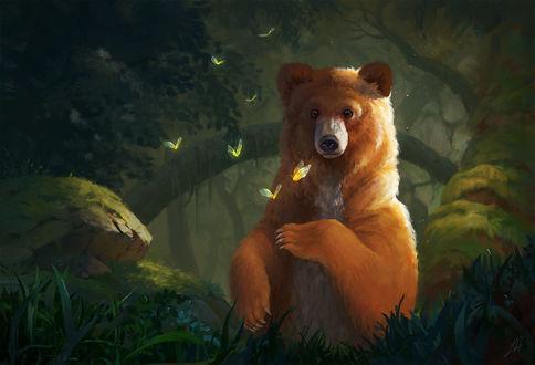 Обои Медведь с бабочками в лесу, by LeeshaHannigan