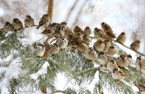 Картинки по запросу картинки птахи взимку