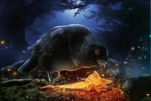 Обои Огромный черный ворон наклонился над спящей, светящейся девушкой эльфом, by LaercioMessias