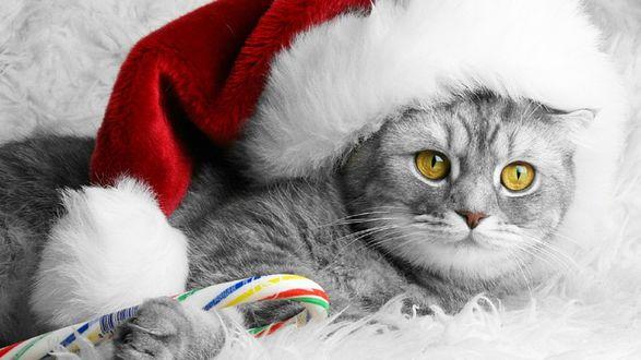 Обои Полосатый кот в новогодней шапке держит конфету в лапе