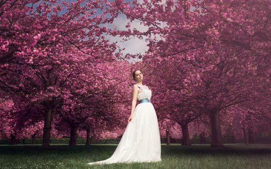 Обои Девушка в белом платье стоит на зеленой траве в саду среди цветущих деревьев сакуры