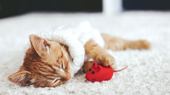 Обои Рыжий котенок спит рядом с красной мышкой