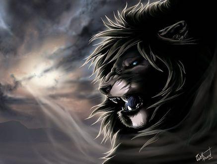 Обои Разъяренный лев с горящими от злобы глазами