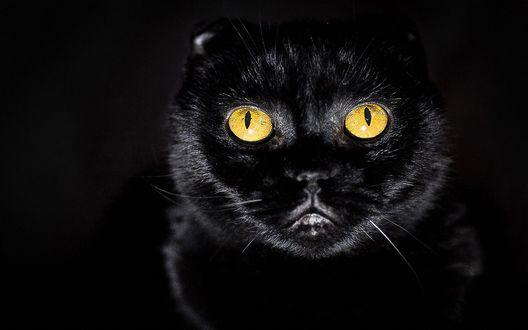 Обои Черная кошка с желтыми глазами на черном фоне