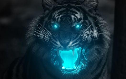Обои Тигр с голубым свечением в пасти и глазах