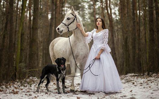 Обои Девушка в белом платье стоит возле лошади и собаки в зимнем лесу