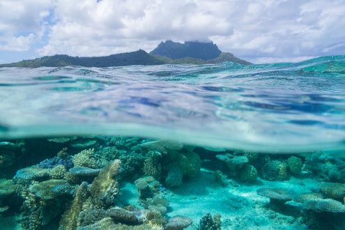 Обои Кораллы в море