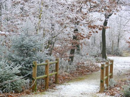 Обои Дорожка в зимнем парке, покрытым инеем