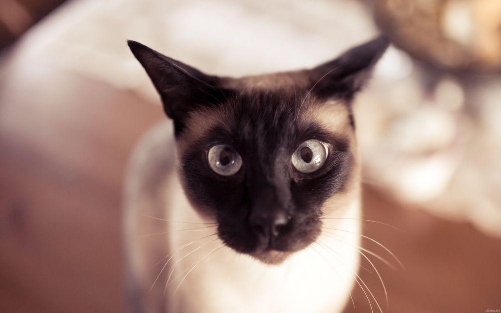 Смешные картинки с котами на рабочий стол