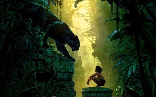 Обои Маугли смотрит на Багиру