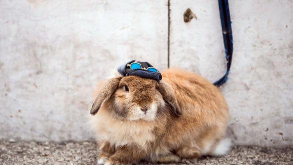 Обои Кролик в шапке на фоне стены