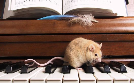 Обои Крыса сидит на клавишах пианино