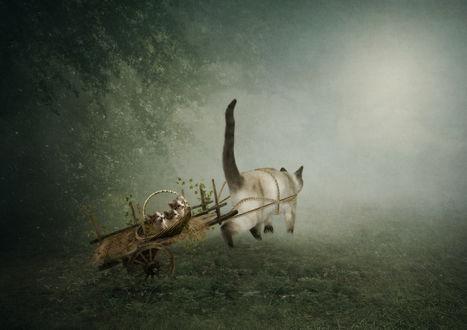 Обои Кошка запряжена в тележку, на которой везет котят, фотограф Рита Нижарадзе