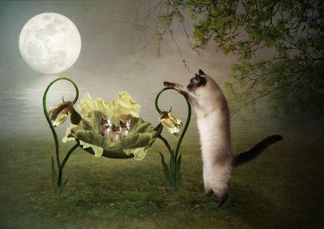 Обои Кошка баюкает котят в колыбельке из цветов, фотограф Рита Нижарадзе