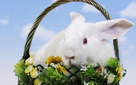 Обои Белый кролик сидит в корзинке на фоне неба