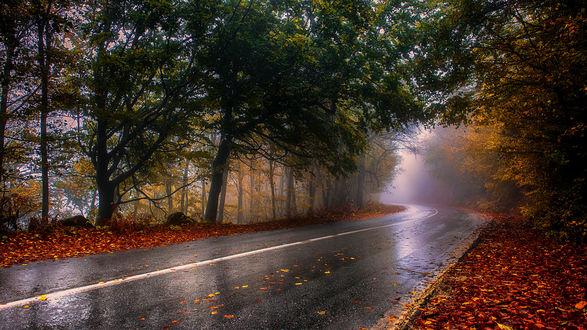 Обои Дорога, уходящая в туман