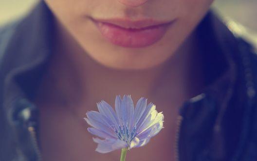 Обои Девушка с цветком цикория, фотограф Паша Иванов