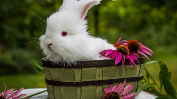 Обои Белый кролик сидит в корытце с цветами