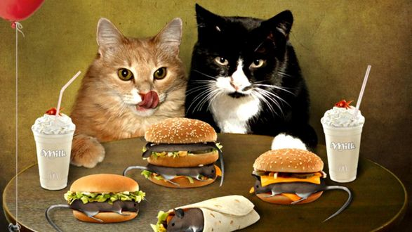 Обои Два кота за столом фаст-фуда
