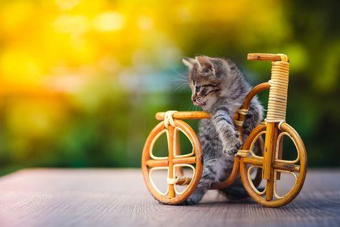 Обои Маленький полосатый котенок с игрушечным деревянным велосипедом, на размытом зеленом фоне