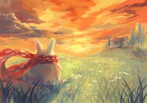 Обои Кролик в красном шарфе стоит в поле на фоне закатного неба