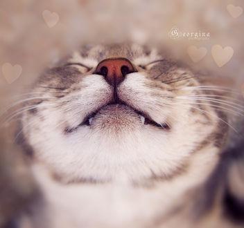 Обои Мордочка полосатого кота, фотограф Georgina