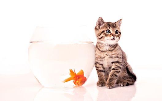 Обои Полосатый котенок сидит возле аквариума с золотой рыбкой
