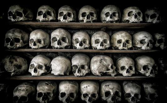 Обои Человеческие черепа на полках