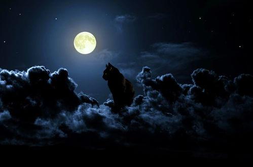Обои Кот сидит на облаке, by RaphaГ«l Vavasseur art