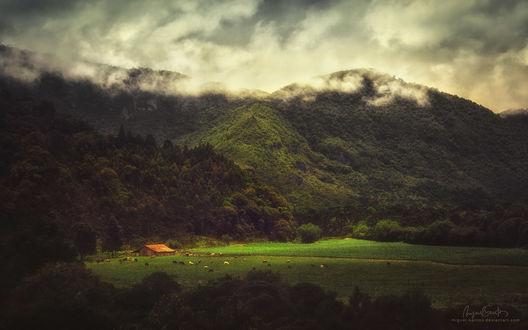 Обои Табун лошадей пасется возле деревяной постройки на фоне зеленых гор