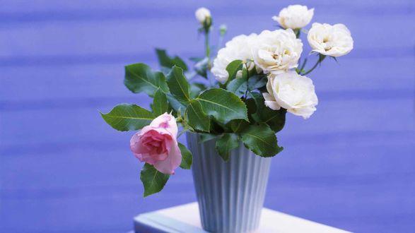 обои розы на рабочий стол 1366х768 № 648455 без смс