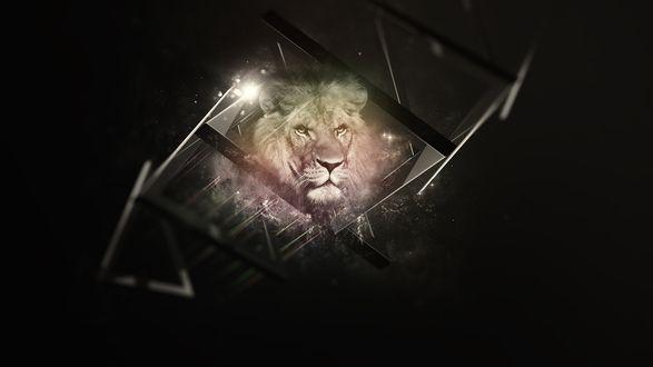Обои Лев на черном фоне