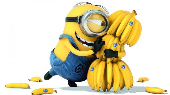 Обои Миньон (mignon — крошка, милашка) - герой мультфильма Миньоны, обнимает связку бананов