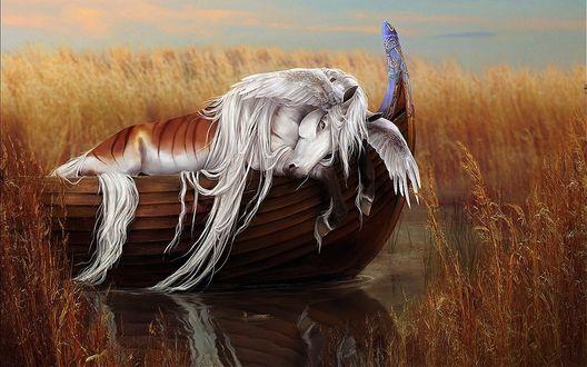 Обои Уставший Пегас спит на лодке, by yewrezz-d9j02jk