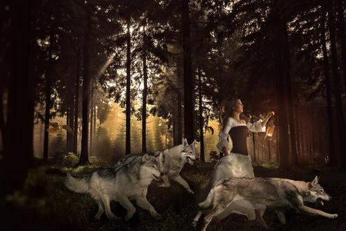 Обои Девушка с фонарем в руке, в окружении волков в лесу
