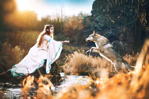 Обои Девушка-эльф и волк