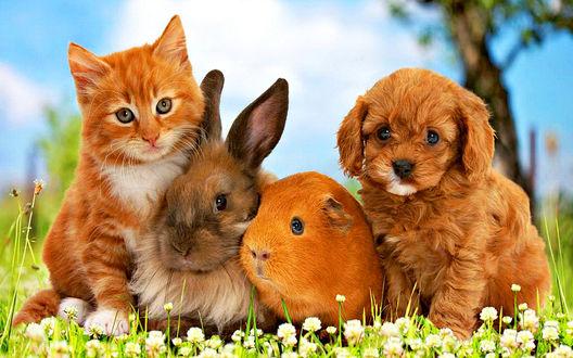 Обои Котенок, кролик, морская свинка и щенок сидят на траве