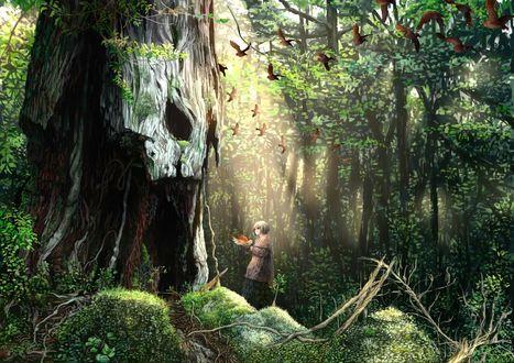 Обои Девочка с птицей в руках стоит у большого дерева с дуплом, в зачарованном лесу, art by Fukoujiman