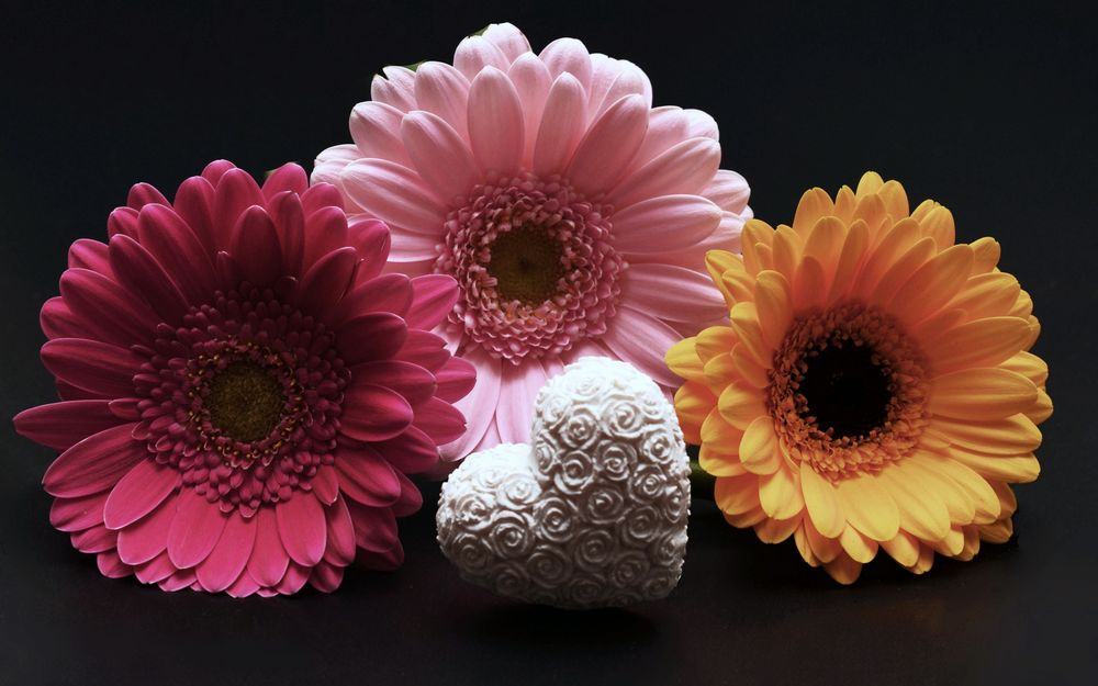 Экологическая сказка о цветке