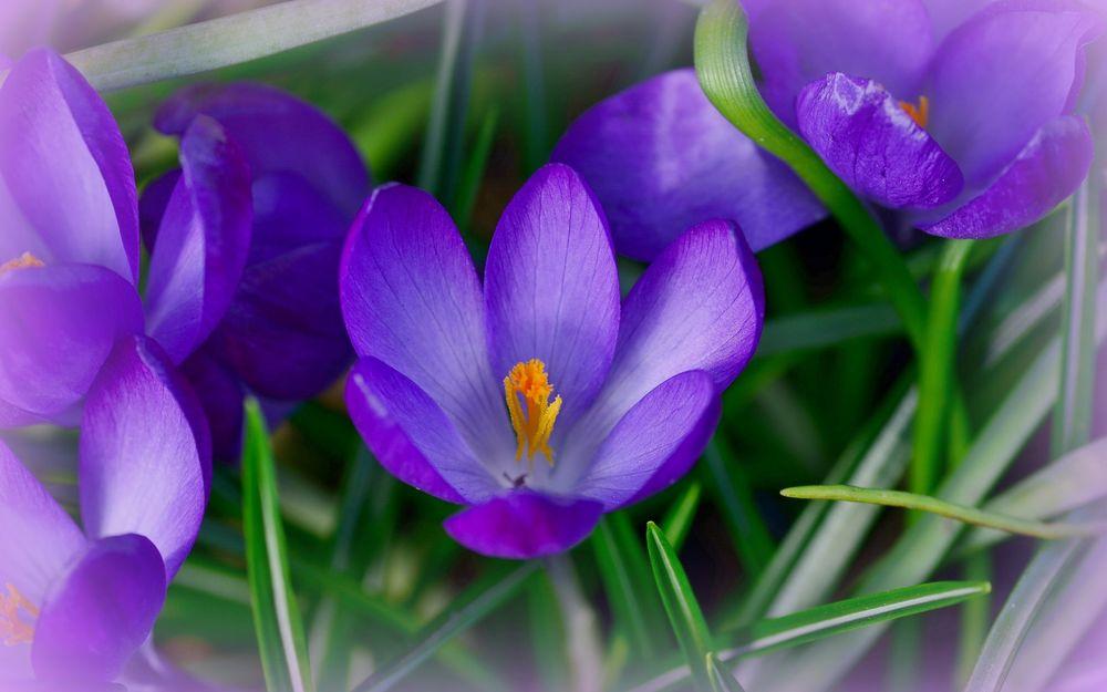 Красивые открытки про весну фото, годовщиной