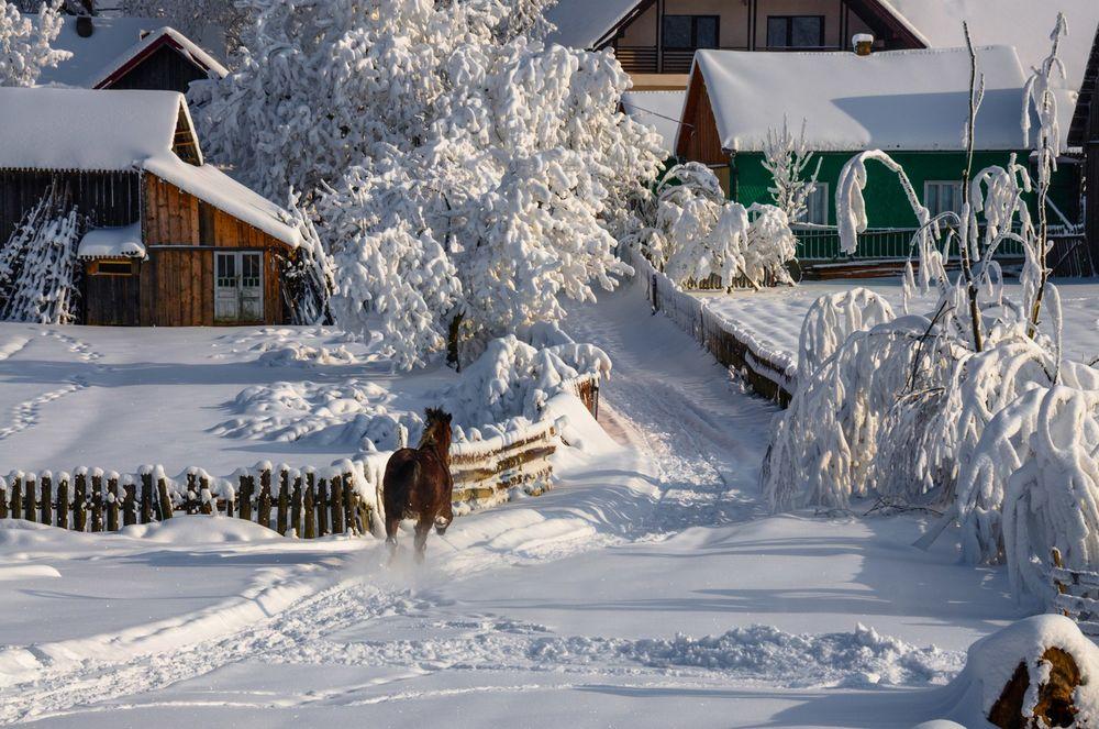 Обои для рабочего стола Деревянные дома, изгородь, деревья и дорога - все покрыто снегом, по дороге бежит лошадь, by Olari Ionut